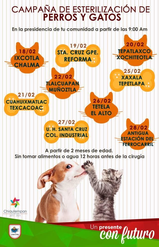 Primera Campaña de Esterilización de Perros y Gatos Chiautempan  2019