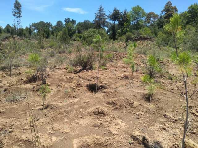 Con la suma de voluntades logramos sembrar 10 mil árboles: alcalde