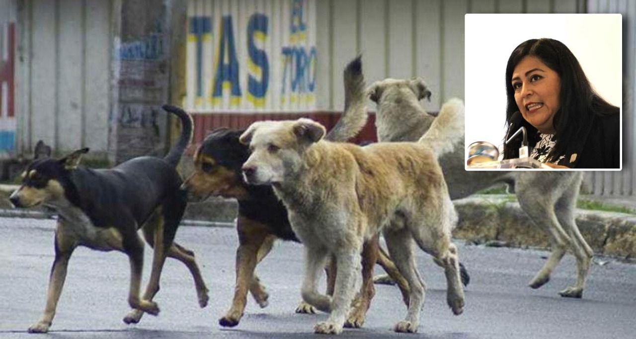Diputada de Morena propone exterminar perros abandonados que molesten a la ciudadanía