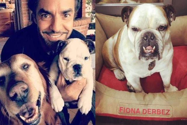 Denuncian a Eugenio Derbez por explotar a su perro Fiona en el trabajo