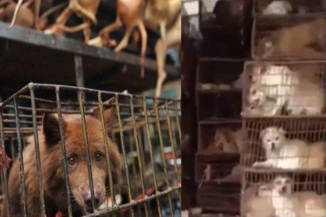 En China siguen vendiendo comida hecha de perro pese a las advertencias sanitarias