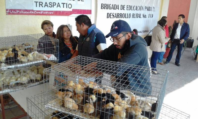 Ayuntamiento de Chiautempan entrega 573 aves de traspatio a 45 familias