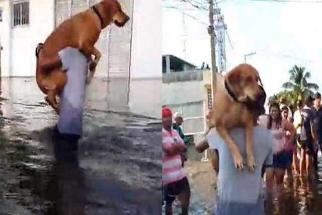Rescatan a perrito que fue amarrado durante inundación en Tabasco; aún así regresa a su casa