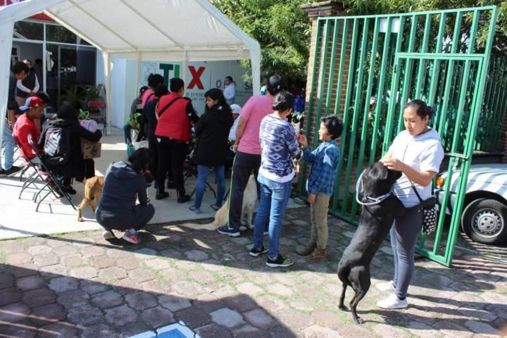 Ayuntamiento concientiza a la ciudadanía de este esterilizar a sus mascotas