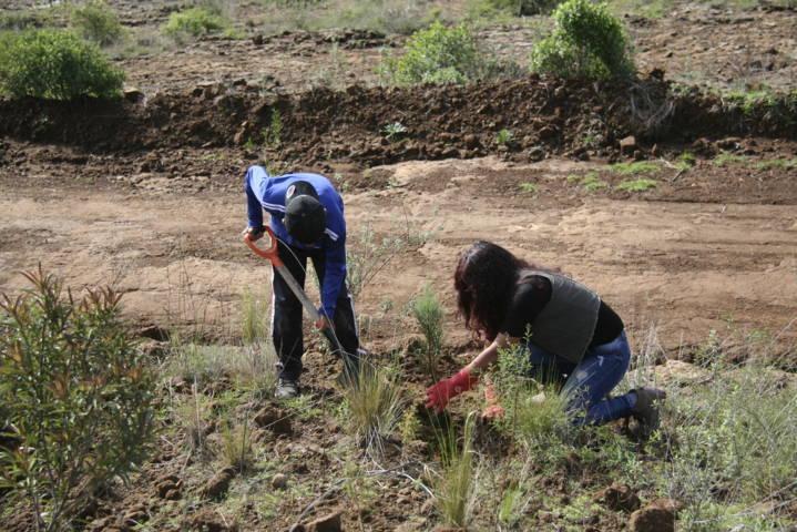 Alcalde encabezo reforestación en el cerro de Otongatepetl