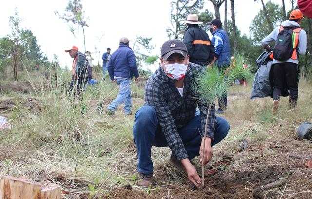 Realizan mega plantación para contrarrestar daños del gusano descortezador