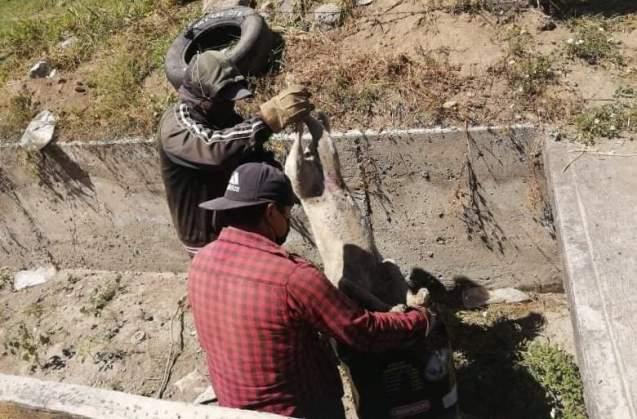 Denuncia envenenamiento masivo de perros en el municipio de Huamantla