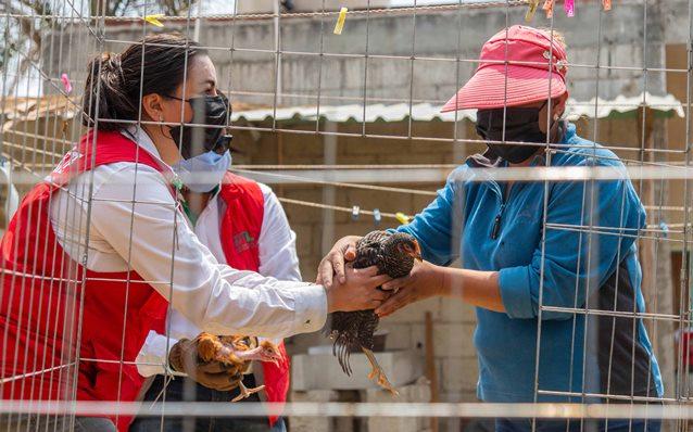 """Supérate"" entrega paquetes de aves a más de mil 900 familias"