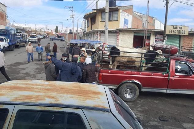 Vuelven a suspender el tianguis de ganado de Tepetitla