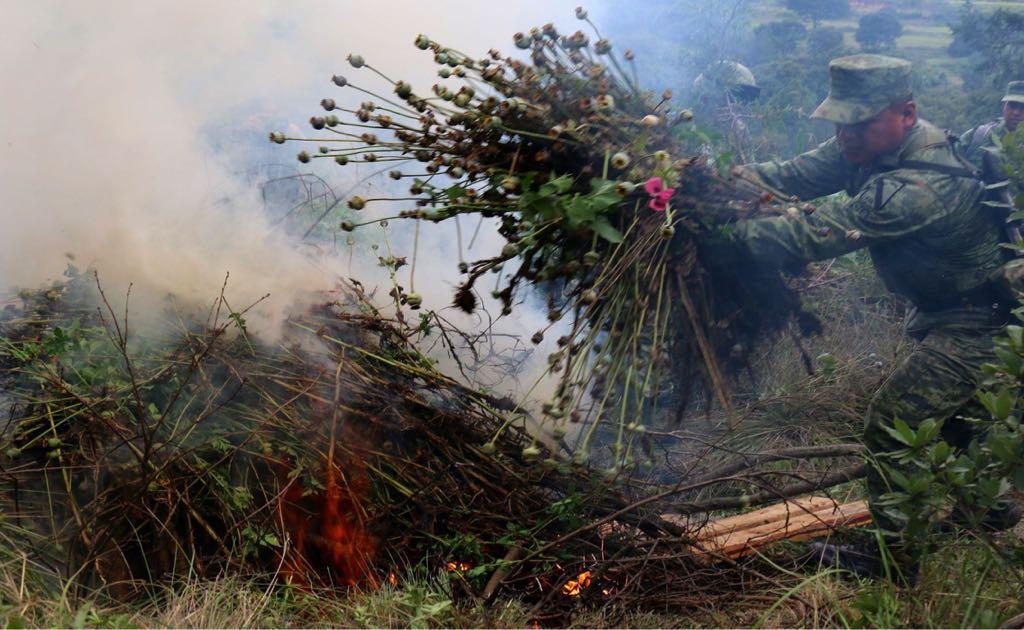 Ejército destruye plantío de amapola en Hueyotlipan; el primero en su tipo en Tlaxcala