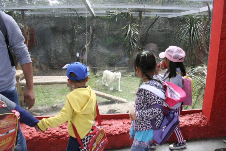 Para muchos niños conocer el Zoológico fue algo maravilloso: Angélica Hernández