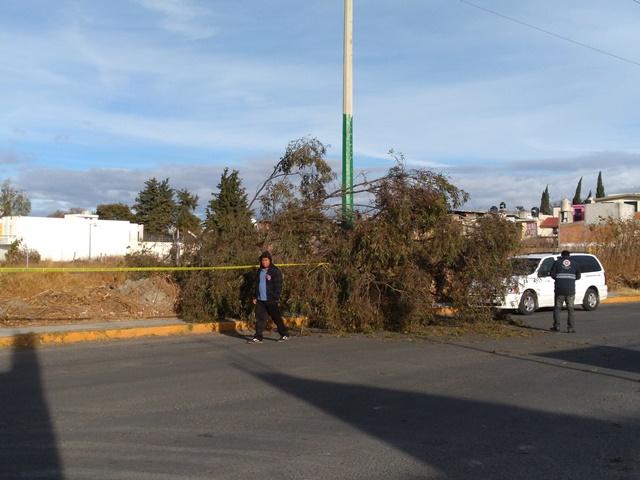 Fuertes vientos provocan caída de árbol en Chiautempan