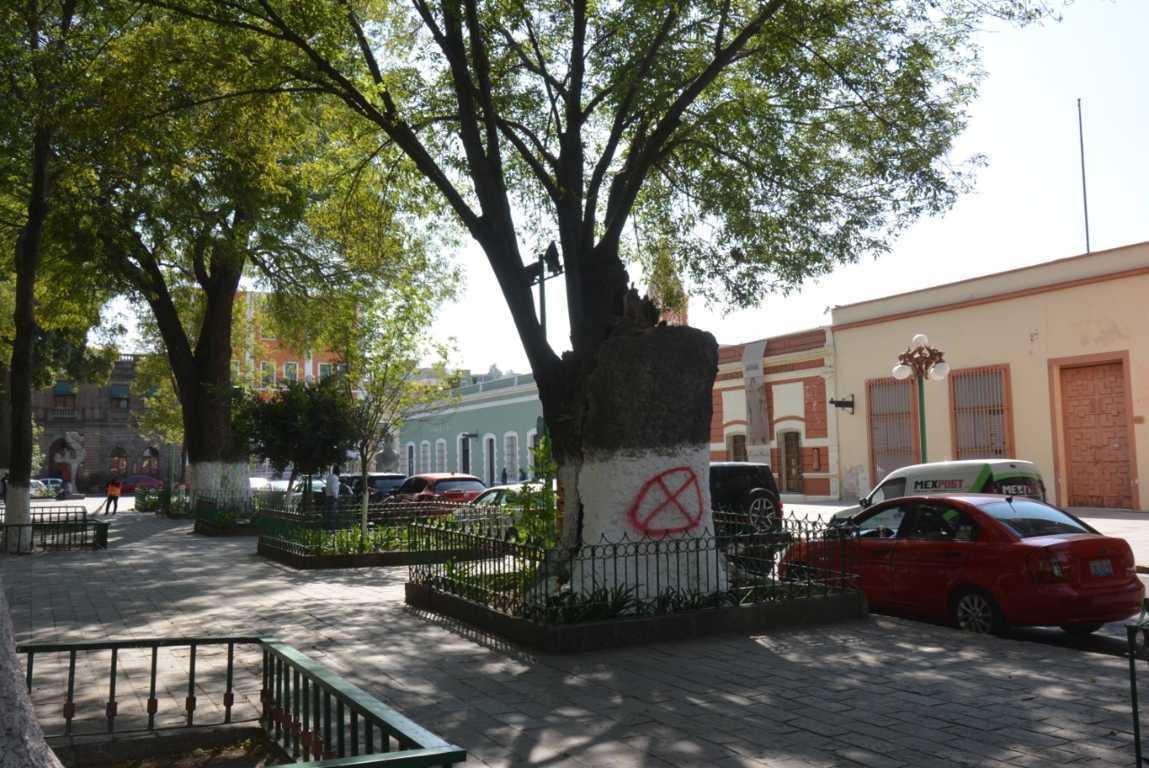 No derribará Ayuntamiento de Tlaxcala árboles del Centro Histórico