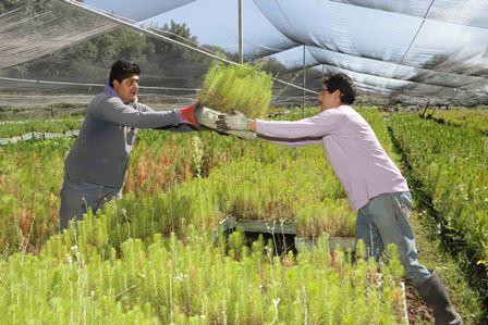 Buscan reforestar zonas urbanas con 200 mil árboles