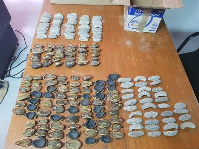 Aseguran piezas marinas que ingresaron de forma ilegal