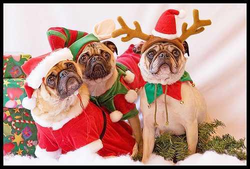 Invita Totolac al concurso de disfraz Navidad Con Mi Mascota