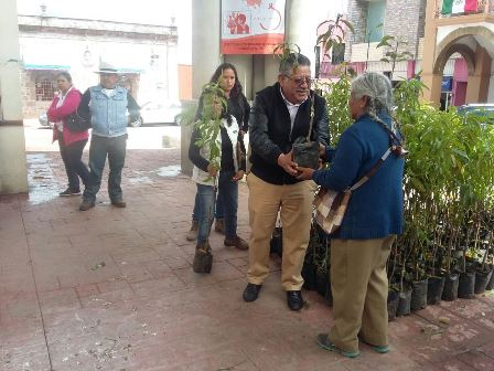 Entrega mil árboles frutales el alcalde de Contla