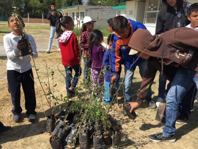Plantan árboles en Xicohtzinco para combatir el cambio climático