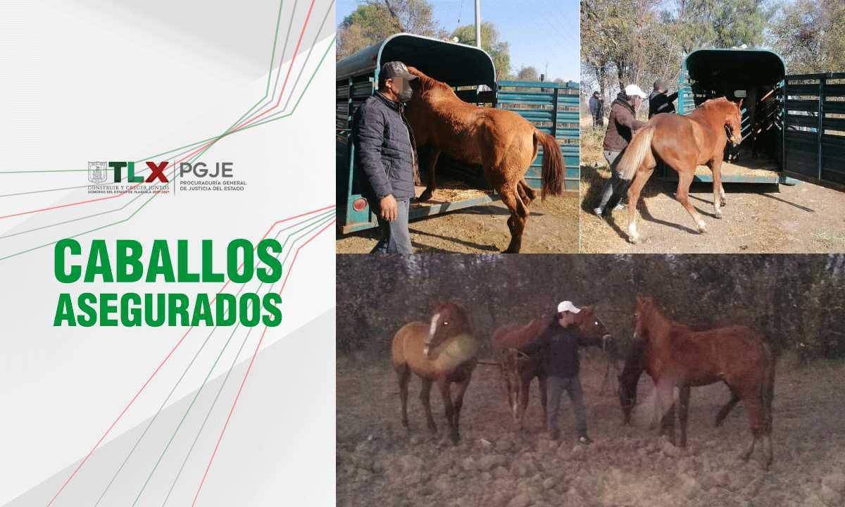Recupera PGJE cuatro caballos robados en Tlaxcala