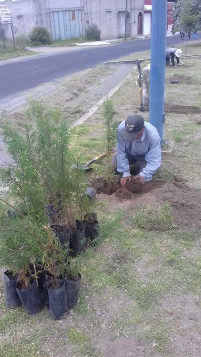 Con la siembra de 2 mil árboles mejoramos nuestro entorno ecológico: alcalde