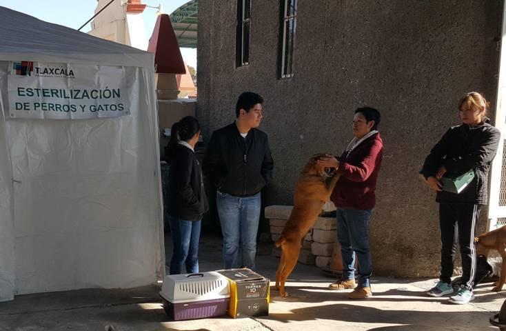 Retoma alcaldía capitalina Campaña de Esterilización canina y felina