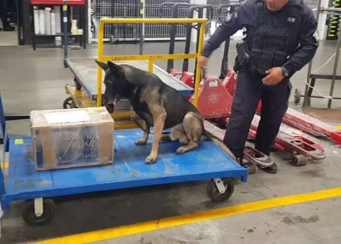 Encuentran más de 54 kilogramos de cocaína en empresas de mensajería