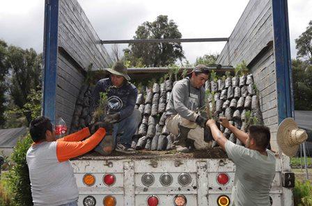 Termina reforestación de la Malinche con 250 mil árboles