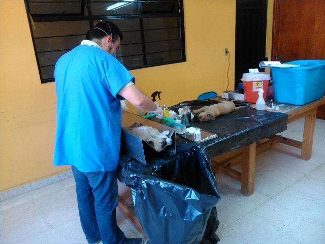 Arranca campaña de esterilización canina en Contla