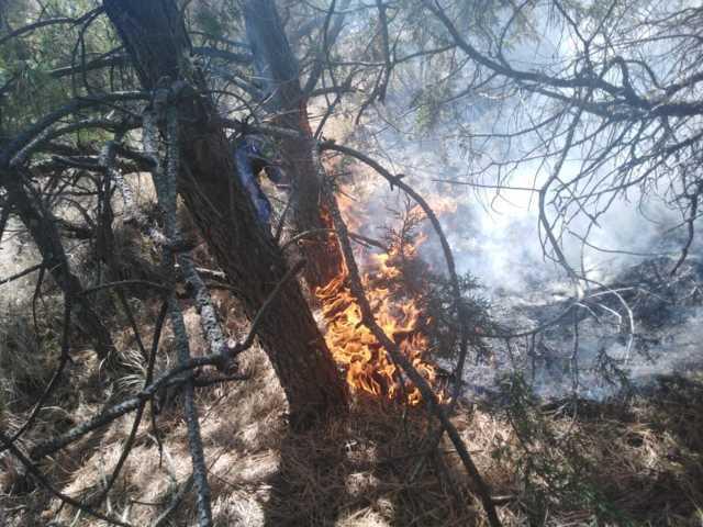 Sofoca PC de Ixtenco incendio en el cerro de Xalapasco
