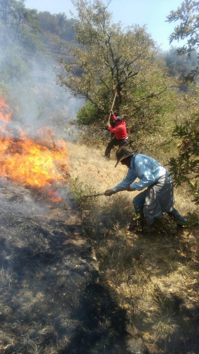 Logran sofocar incendios con brigadas especiales en Panotla
