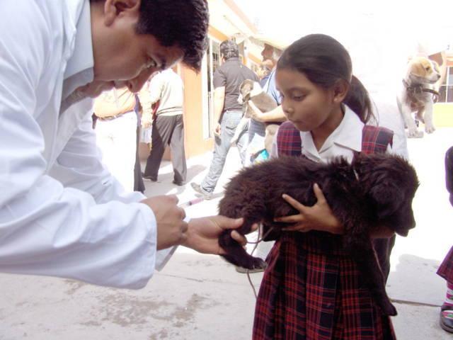 Tlaxcala, primer lugar nacional en prevención y control de rabia