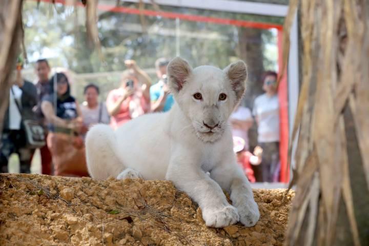 Se incrementa asistencia al Zoológico del Altiplano