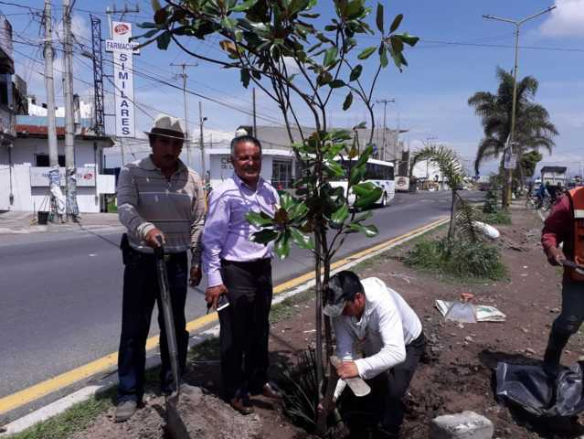 Alcalde de Mazatecochco encabezo reforestación en el camellón de la Vía Corta