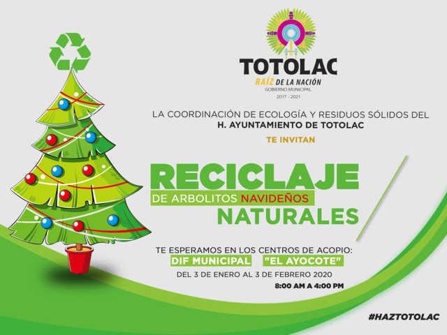 Inicia campaña de reciclaje de árboles navideños naturales en Totolac