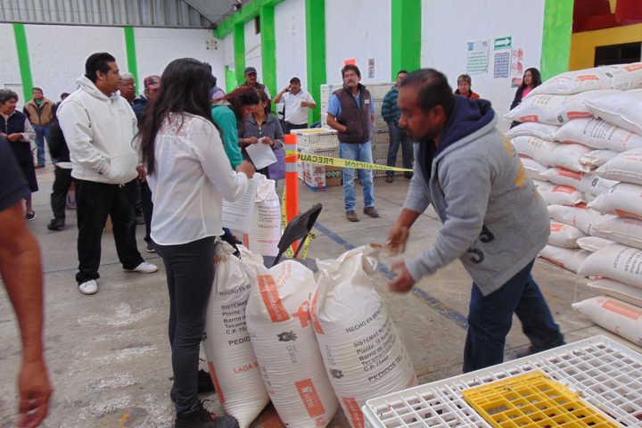 Carin Molina impulsa la economía de 89 familias con paquetes de pollos