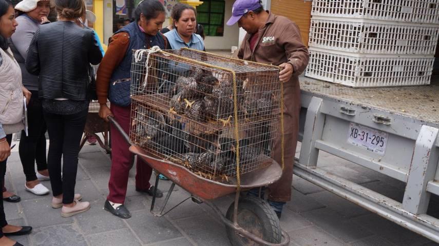Entregan especies menores en el municipio de San Pablo Del Monte