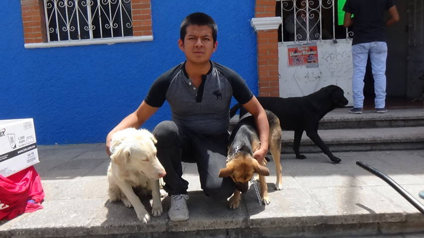 Ayuntamiento de SPM implemento jornada de esterilización canina y felina
