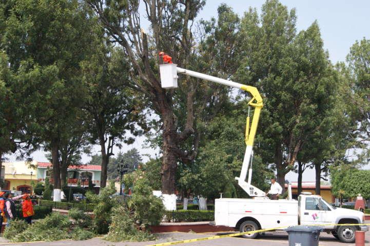 Realiza brigada de sanidad forestal desrame en Plaza de Tlaxco