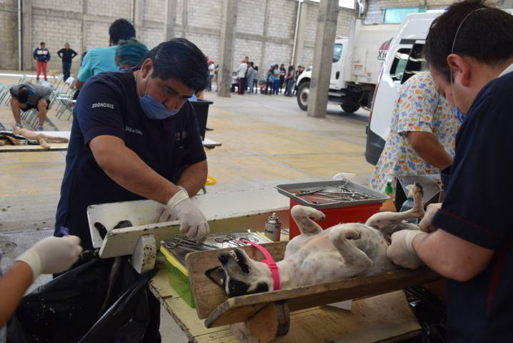 Ayuntamiento promueve la 2da campaña de esterilización canina y felina