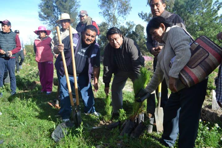 Ayuntamiento llevó a cabo la 2da campaña de reforestación en barrancas y colonias