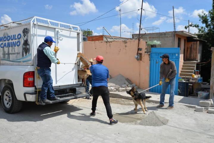 Con el control de perros callejeros evitas mordeduras y focos de infección: ROC