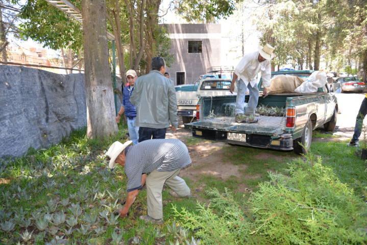 Con estos 5 mil árboles  contribuiremos al cuidado del medio ambiente: alcalde