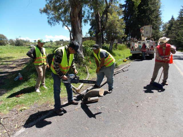 Realiza Ayto. de Nanacamilpa poda de árboles para prevenir accidentes en acceso principal