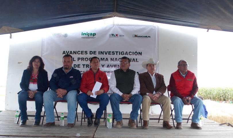 Impulsan en Nanacamilpa producción de trigo de alta calidad