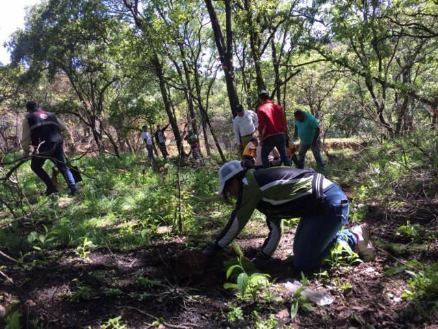 En la 3er campaña Totolac Respira Reforestación 2019 se sembraron 14 mil árboles