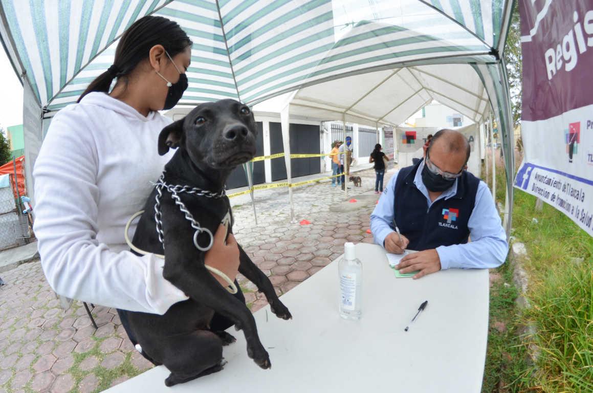 Retomarán actividades de esterilización canina y felina en la Capital