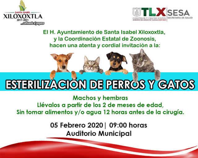 Realizarán en Xiloxoxtla esterilización gratuita canina y felina