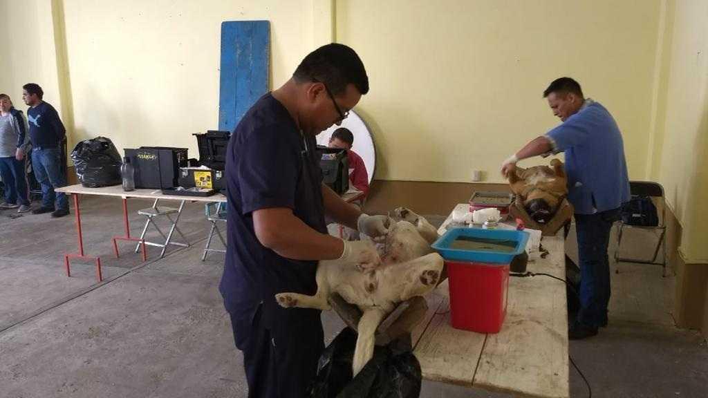 Inicia en Tlaxco campaña de esterilización de perros y gatos