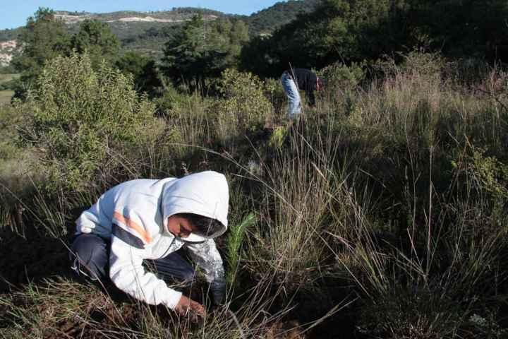 Inician reforestación intensiva en Totolac