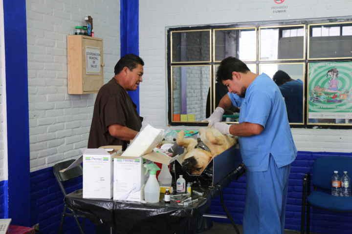 Anuncian nueva campaña de esterilización canina en Contla